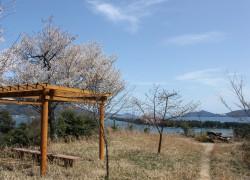 桜山展望所