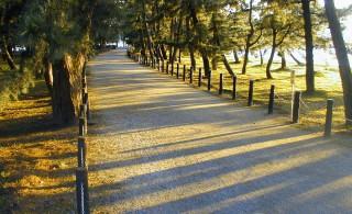 天橋立松並木の中を歩いて移動します。