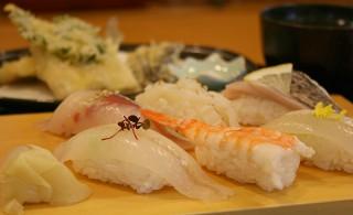 地魚のにぎり+天ぷら三種盛り+みそ汁:2,700円(税込み)                     釣った魚を寿司と天ぷらにしていただけます。(3匹まで)この日の寿司はタチウオ・アジ・スルメイカ・エビ・釣ったキス2(地魚のにぎりは日によってネタが変わります)                      店舗情報 寿司なみじ       住所:宮津市波路2399-2      水曜日と第3火曜日はお休み