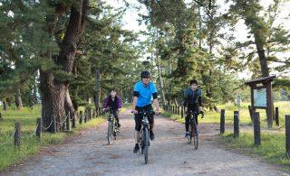 松並木をE-BIEKで走る写真